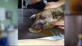 Missouri dog rescued after 72 hours...