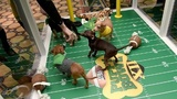 Puppy Bowl tackles pet adoption