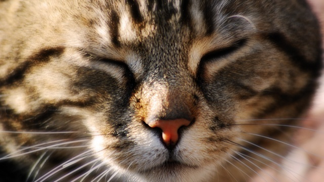 Cat face, tabby_1773147282461531