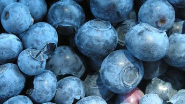 Cold Foods - Blueberries_2421925659803579
