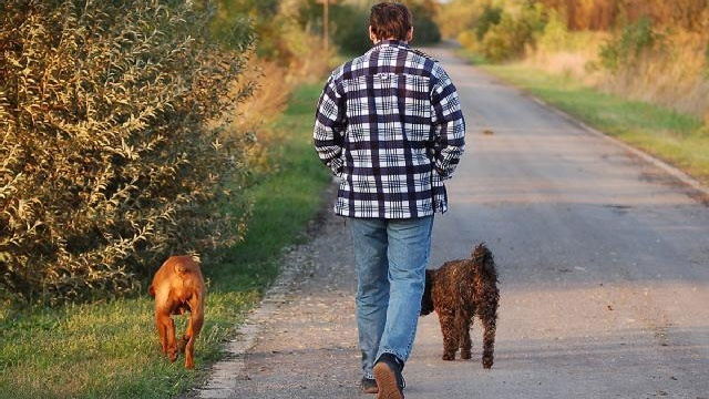 Dog ownership linked to lower risk of heart disease