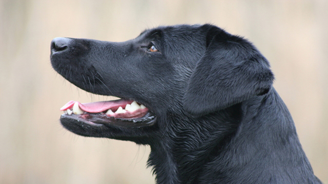 FDA warns of dog bone treats after 90 illnesses, 15 deaths reported