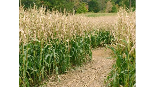 Family accidentally leaves 3-year-old behind in corn maze
