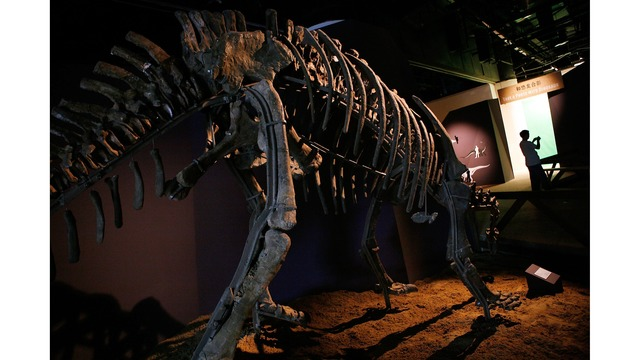 dinosaur fossil at Shanghai Science and Technology Museum36515259