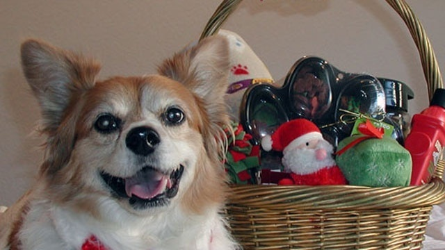 Gifts to put in pooch's holiday basket