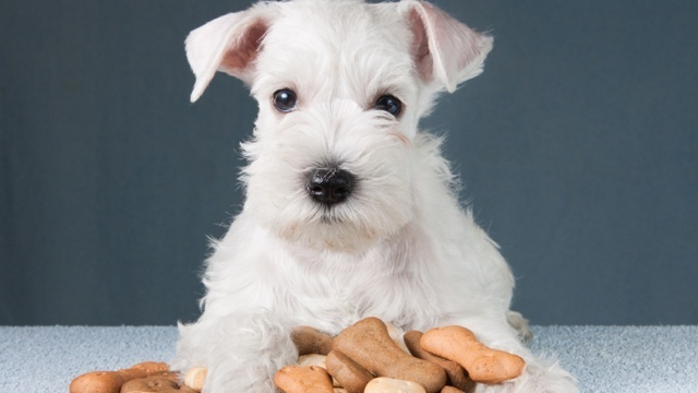 How to keep pet food safe