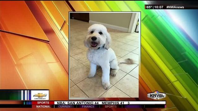 Funeral Homes in Fayetteville Use Therapy Dog to Help People