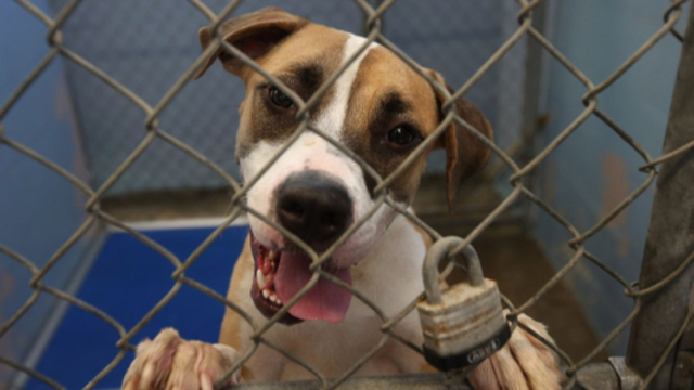Gov. Wolf Signs Libre's Law, Bill To Strengthen Animal Protections