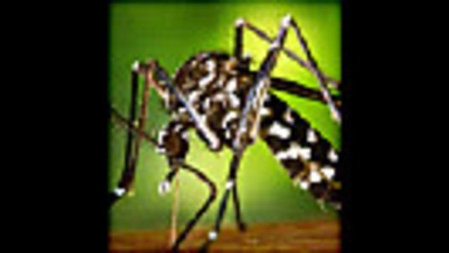 Zika Drives Heightened Mosquito Fears: Survey