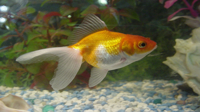 Belgian hotel rents fish to lonesome guests