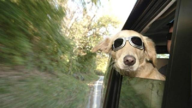 Car accessories to keep your dog safe