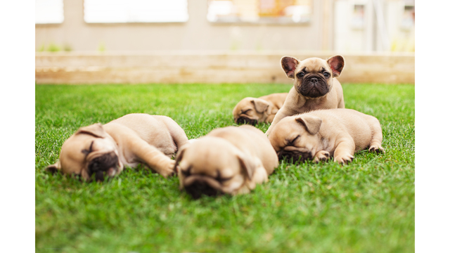 4 signs your dog is healthy