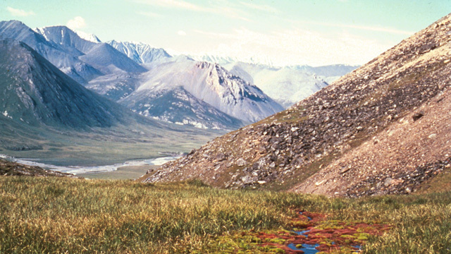 The Senate tax bill would allow oil drilling in Alaskan wildlife refuge