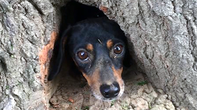 Dog rescued from tree