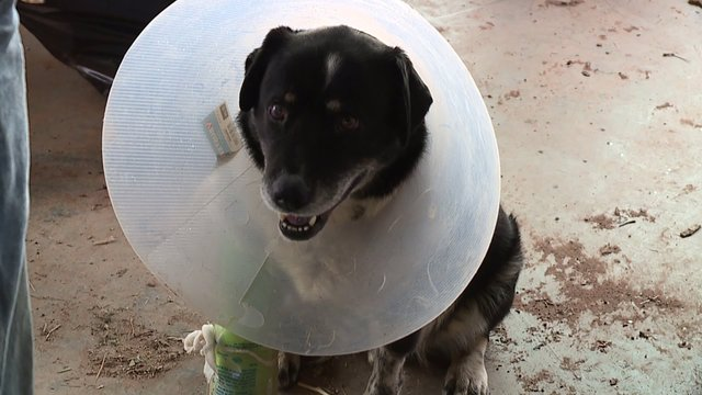 Dog picked up by tornado survives