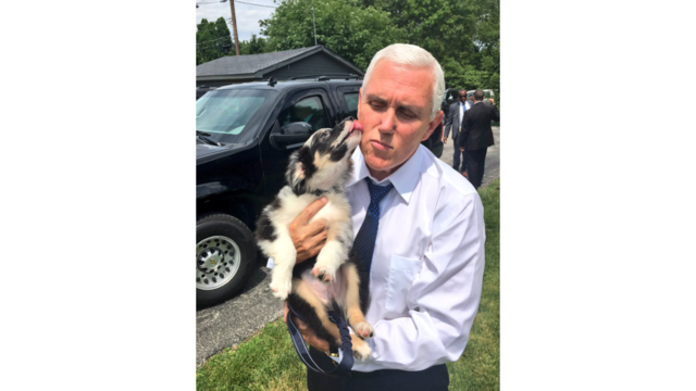 Mike Pence gets a puppy