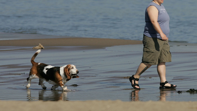 Basset hound dog walking on beach with woman57963442