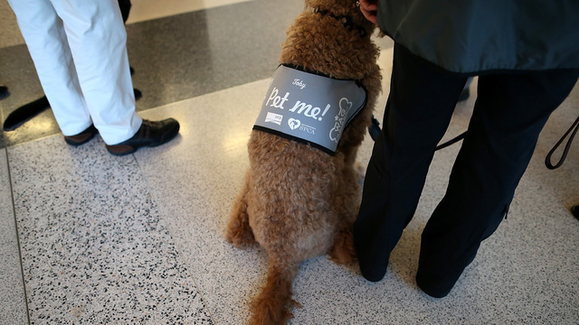 Therapy dogs help out at funeral homes