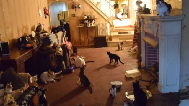 SPCA rescues 100 cats from Schuylkill County home