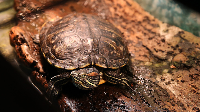 37 cases of salmonella in 13 USA states linked to pet turtles