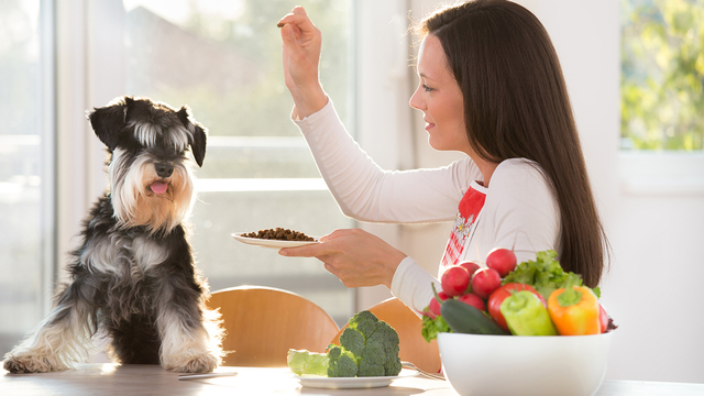 What human foods can dogs eat?