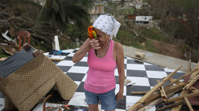 Woman parrot destroyed home Puerto Rico81015693