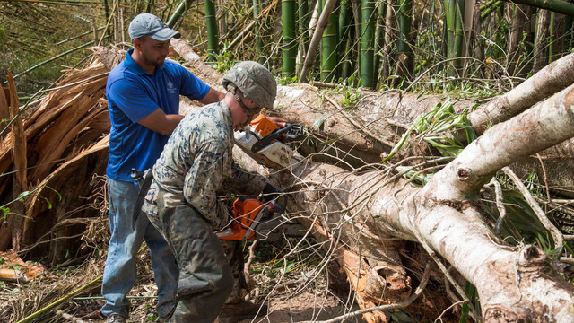 ceiba, puerto rico, us marine, clear a tree after hurricane maria13185738