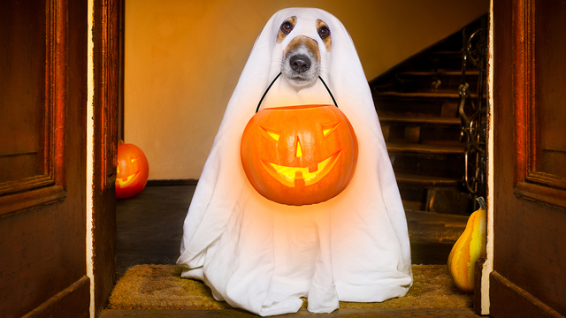 Oct. 28: Student Government 'Kick or Treat' Slated for Home Men's Soccer Game