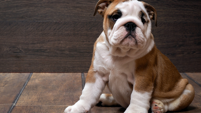 The Benefits of Proper Pet Nutrition