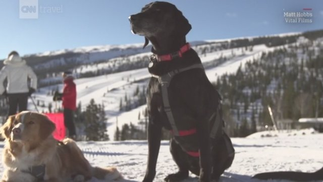 Colorado's ski rescue dogs are the real-life Paw Patrol