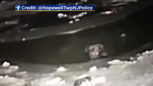 Cop crawls on thin ice to save dog from pond