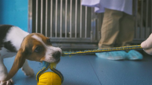 Chinese firm clones gene-edited dog for blood disorder research