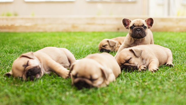 5 reasons why you should adopt a puppy