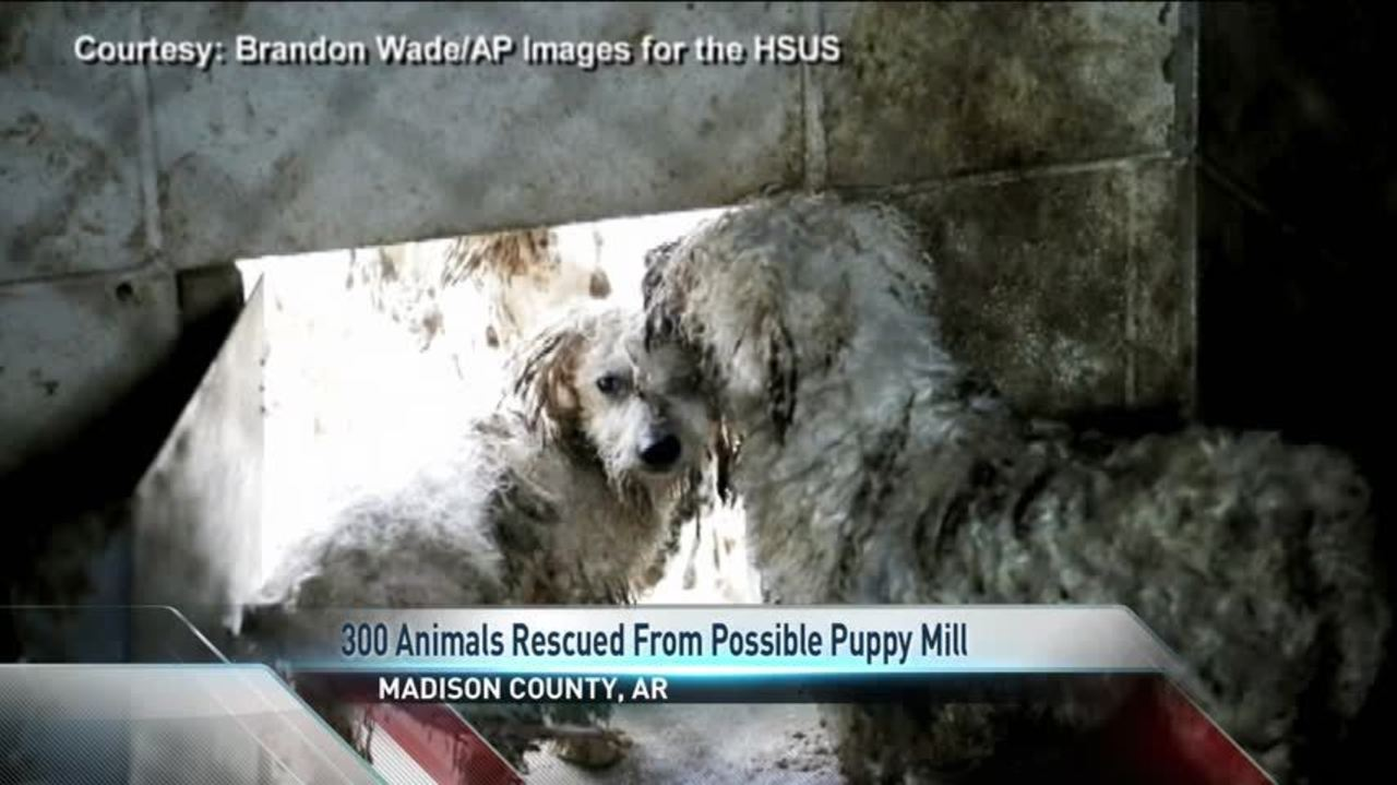 Puppy Mill Rescue In Arkansas