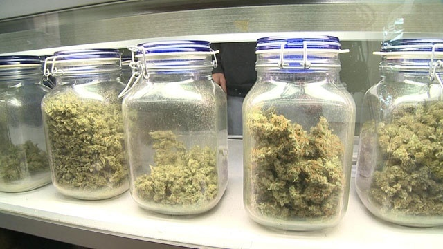 NY to allow medical marijuana as alternative to opioids