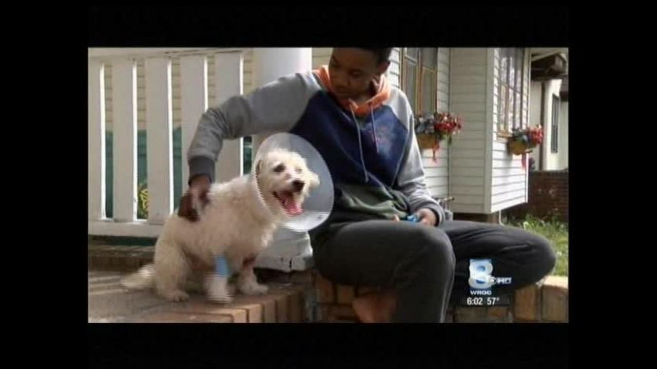 Animal services involved after pitbull attack in