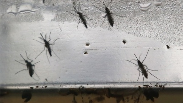 First travel-related case of Zika confirmed in El Paso