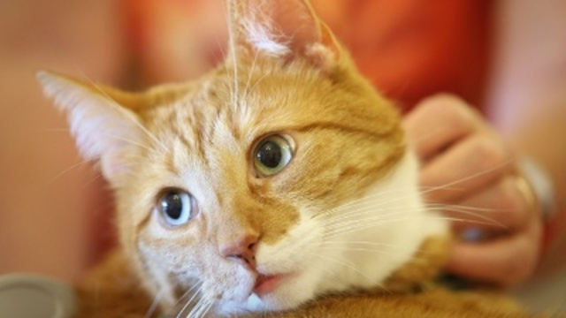 Lollypop Farm waives cat adoption fees for 'Free Cat Day'
