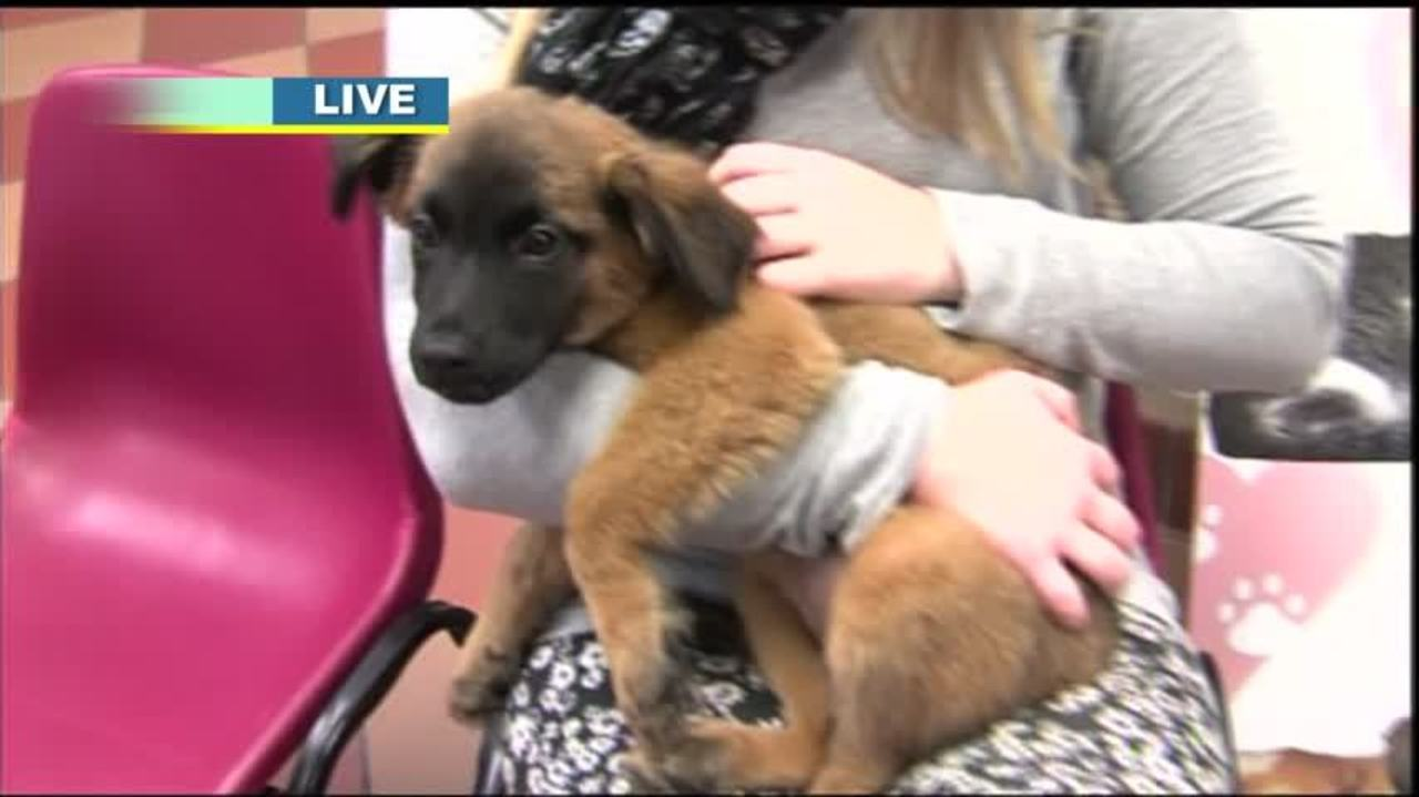 Fox Valley Humane Association Is Expanding