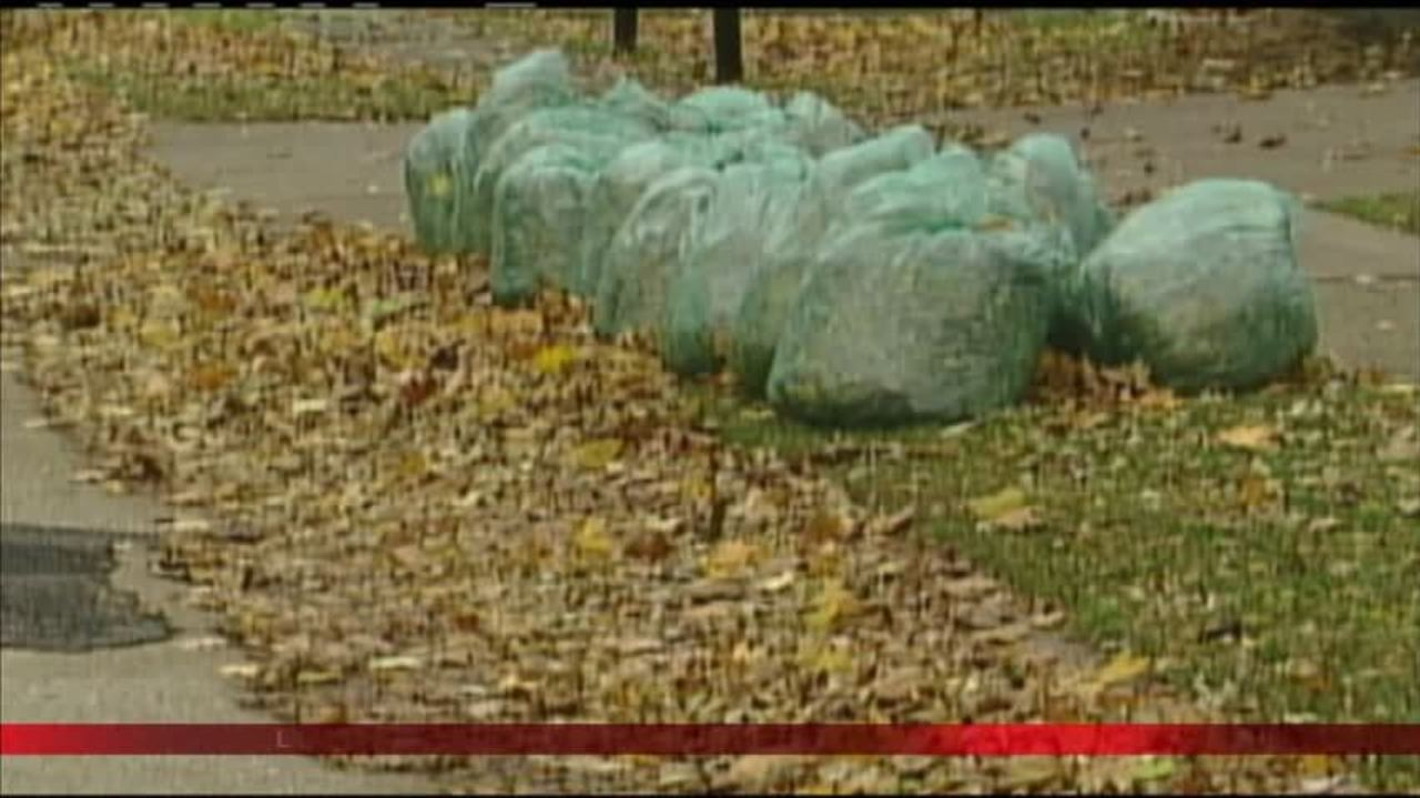 City extends leaf collection