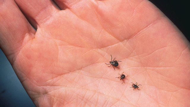 Exotic Tick Found on Farm in Virginia