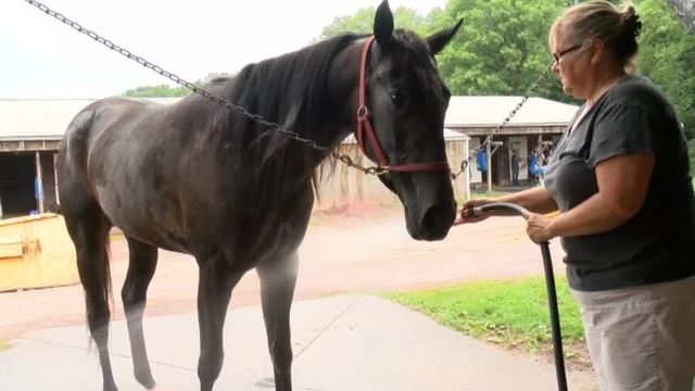 all in family - behind the scenes with the first family of nepa harness  racing