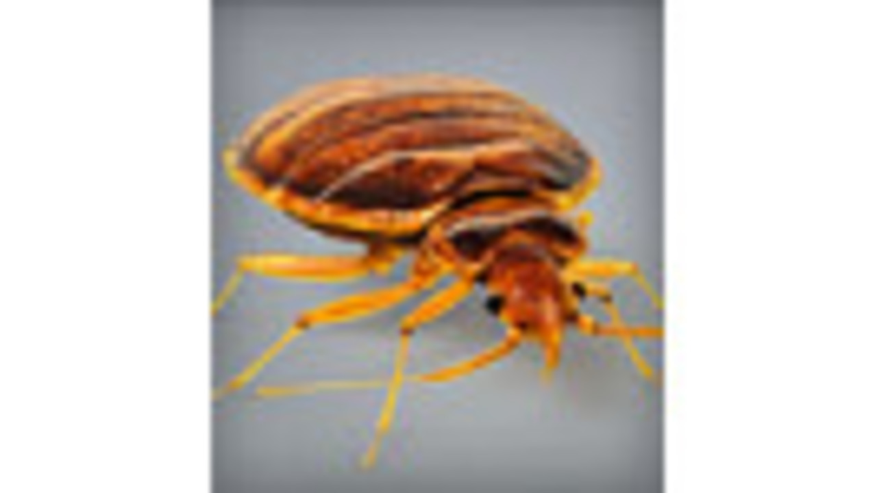 Study finds bedbugs have been around more than 100 million