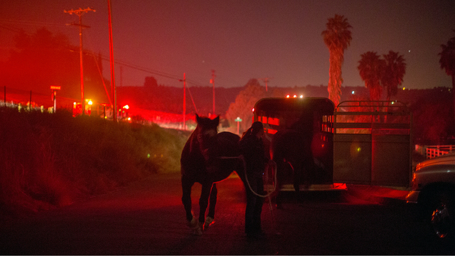 Lilac Fire in California Dec 8 horses.jpg31182191