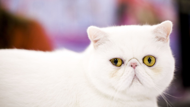 Town smells like cat pee -- but why?
