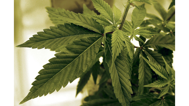 FDA Approves First Marijuana Based Drug