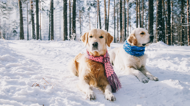 Cold weather safety tips for your pets