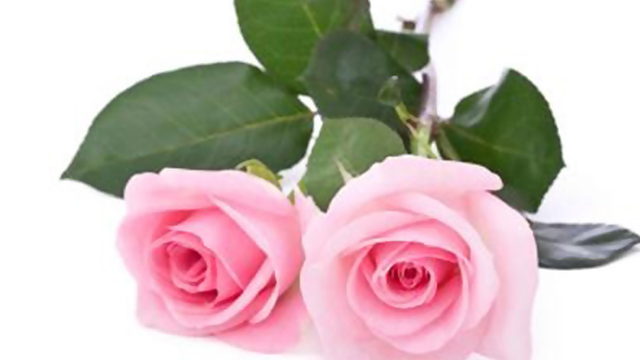 What Do Valentine Flowers Really Mean