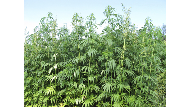 Texas removing hemp from controlled substances list