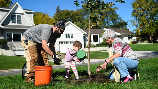 10 reasons to plant a tree this spring